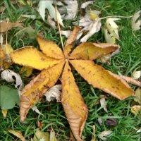 Вот так упали каштановые и кленовые листья :: Нина Корешкова
