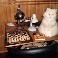 Кот шахматист. :: венера чуйкова