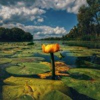 Там где дремлют сазаны. :: Андрей Лепилин
