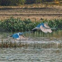 А белый лебедь на пруду.... :: Андрей Лепилин