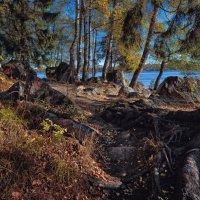Камни vs корни :: Евгений Никифоров