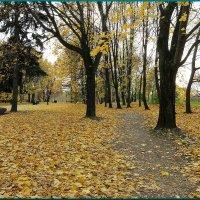 по тропинкам бродит осень... :: Николай Дони