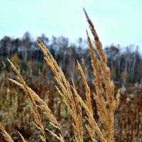 Ноябрь трава у дороги. :: Михаил Столяров