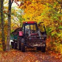 Деревенская осень. :: donat
