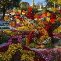 Композиции из хризантем :: Андрей Нибылица