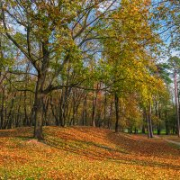 05.11.2017 Балтийская осень 3 :: Sergey Polovnikov
