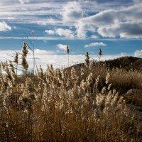 """Выцветший ноябрь.  """"Травам нужно поклониться И навечно в них влюбиться..."""" :: Надежда"""