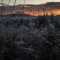 Первый мороз... :: Anna Leshtshenko