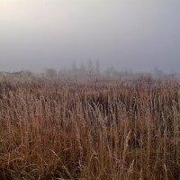 Туман ! (А ехать в  Москву  надо  сегодня и  сейчас) :: Виталий Селиванов