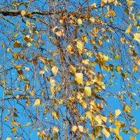 Золотые листья берёзки :: Валентина Пирогова