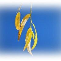 Золотые листья :: Swetlana V