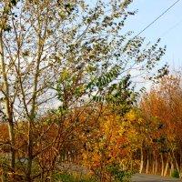 Дорога через осень... :: Тамара (st.tamara)