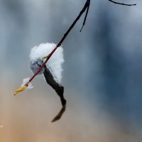 Осень, снег, ветка :: Александр Синдерёв