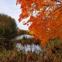 Autumn. :: Алексей Жуков