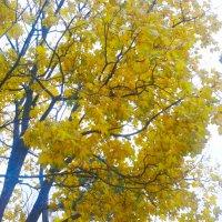 Осень золотая :: Юлия Закопайло