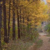 Листья падают, листья падают – неоконченный лета романс... :: Елена Ярова