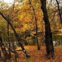 Тишина... лишь слышно, как падает лист... :: Наталья Костенко