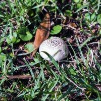 Городские грибы ..... :: Aleks Ben Israel