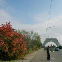 Осень украшает :: Александр Рыжов