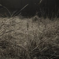 Осенняя  трава ... :: JT --------      SHULGA  Alexei