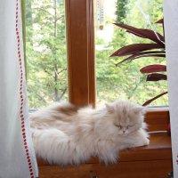 На окне :: венера чуйкова