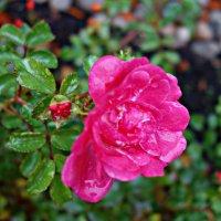 Цветы ноября..... :: Galina Dzubina