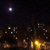 Лунная ночь :: Волк-ПРИЗРАК Фомин Виталий