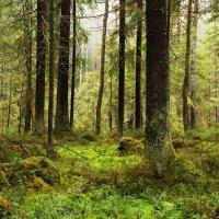 Осень в лесу :: Aнна Зарубина