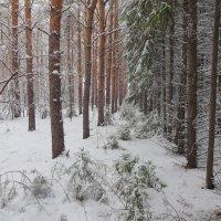 Морозный лес...В парадном одеянье деревья-мумии, деревья-изваянья... :: Елена Ярова