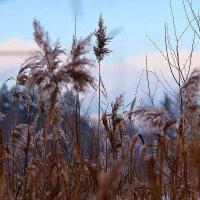 Осенний вечер на болоте :: Лара (АГАТА)