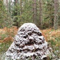 Первый снег :: Николай Варламов