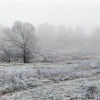 Морозное утро :: Николай Варламов