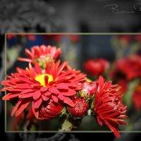 Красное настроение :: Борис Ряузов
