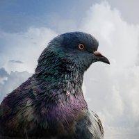 Взгляд орла :: Владимир Кроливец