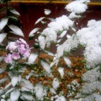 Зима в октябре :: Елена Семигина