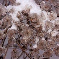 Цветы из сада Снежной Королевы. :: Николай Кондаков
