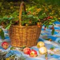 Подарки осени :: Мария Федоренко