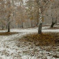 Осень в снежном наряде :: Сергей Герасимов