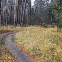 Придорожной памятью трава... :: Лесо-Вед (Баранов)