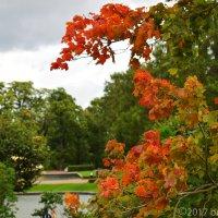 Красная осень :: Марина Богданова