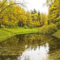 Осень золотая... :: Senior Веселков Петр