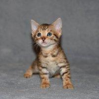 милый котенок :: Наталия Кожанова