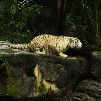 большая кошка :: Анна Бушуева