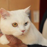 Белый котик :: Sergey Prussakov