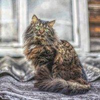 Кот, просто кот! :: Натали Пам