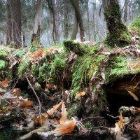 Брутальность ноябрьского леса....2. :: Андрей Войцехов