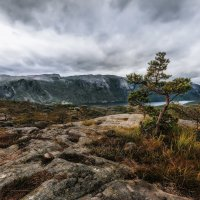 Хмурое небо и дерево. :: Sven Rok