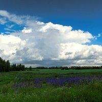 Про облака и люпиновое поле :: Милешкин Владимир Алексеевич