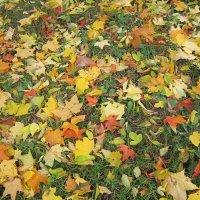 Осенняя палитра :: Дмитрий Никитин