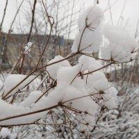 Скоро зима :: Наталья
